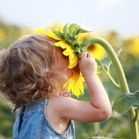Cute child with sunflower in summer field