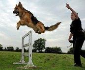 scuola-corso-centro-addestramento-cani