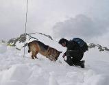 socc alpino