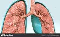 depositphotos_131706744-stock-photo-human-respiratory-system