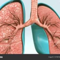 depositphotos_131706744-stock-photo-human-respiratory-system