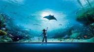 acquario-di-genova-vasca-razze-500x281